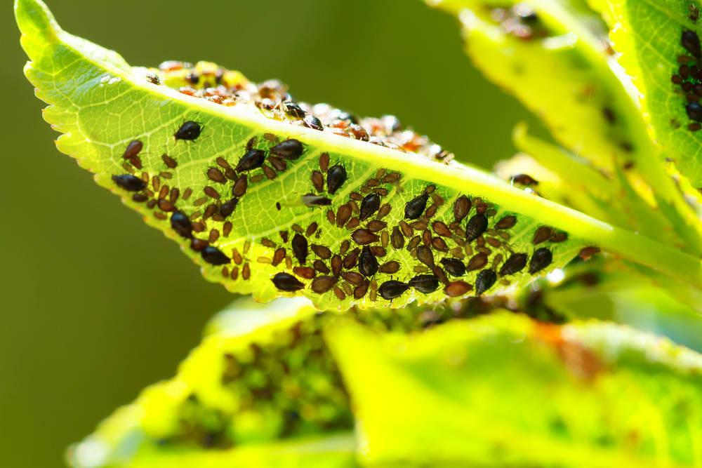 Cómo lidiar contra las plagas de insectos en verano en las fábricas españolas